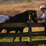 tahoe truckee horseback riding image