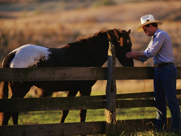 truckee tahoe horseback riding image